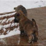 Winterwelpen erkunden den Schnee